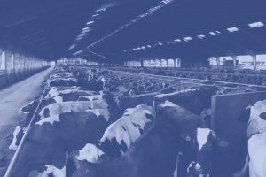 Stel direct uw vraag - TSM International - Advies Melkvee