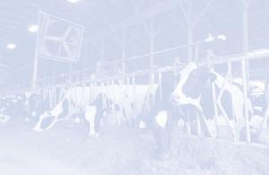 TSM International - Advies Melkveehouderij Mineralen